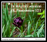 Russian Bible Verse (RUSV) Photo Art